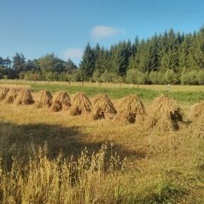 Snopy na Jitrech u Kunžaku, které se na polích již jen tak nevidí.