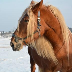 Koně pana Vojty v Matějovci